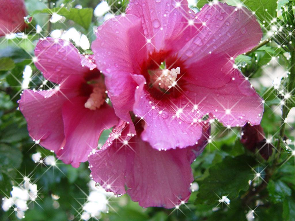 Цветы которые растут кустом
